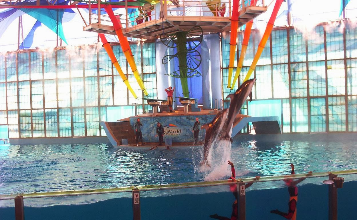 dolphins jumping at seaworld san antonio texas