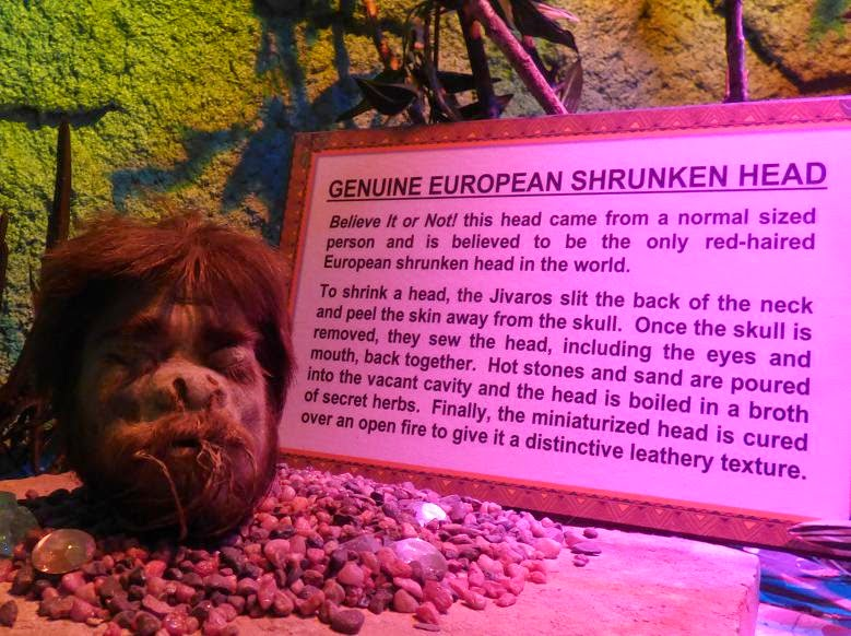 genuine european shrunken head