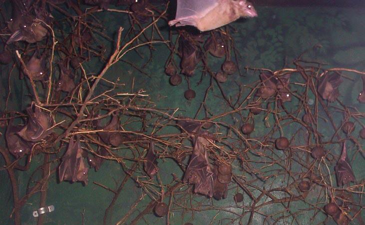 Brownsville TX   brownsville zoo bats