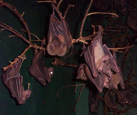 Brownsville TX   brownsville zoo bats2