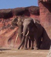 Brownsville TX   brownsville zoo elephants