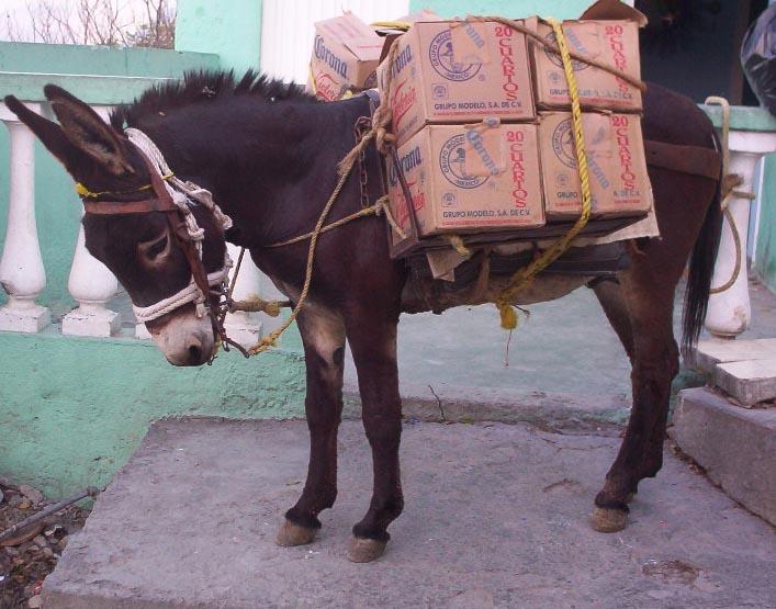 monterrey mexico   donkey 2