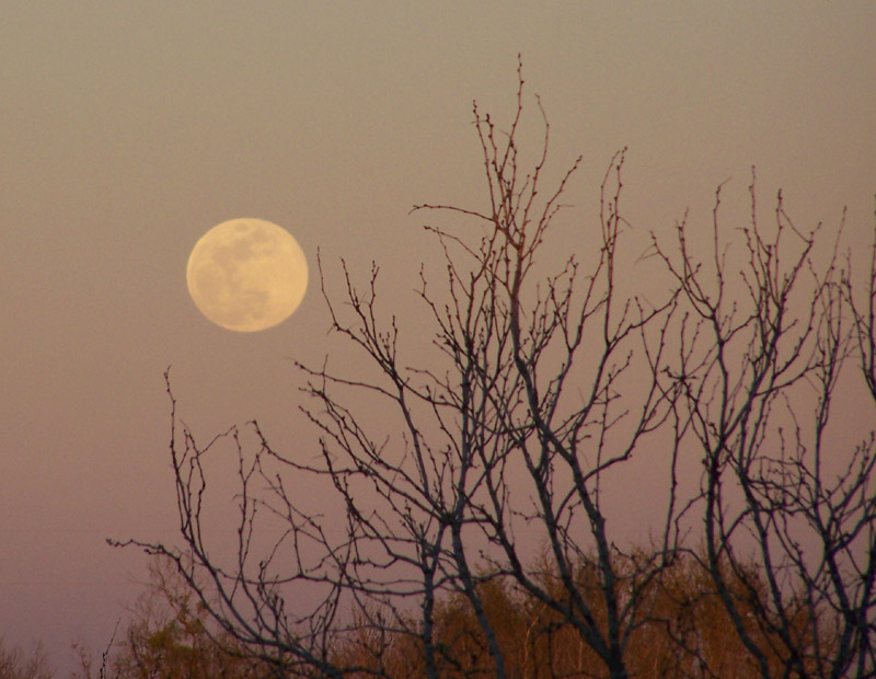 moonrising through backyard tree branches