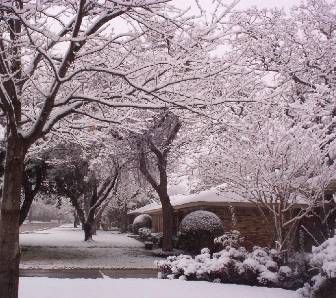 Irving texas   tree in snow 2