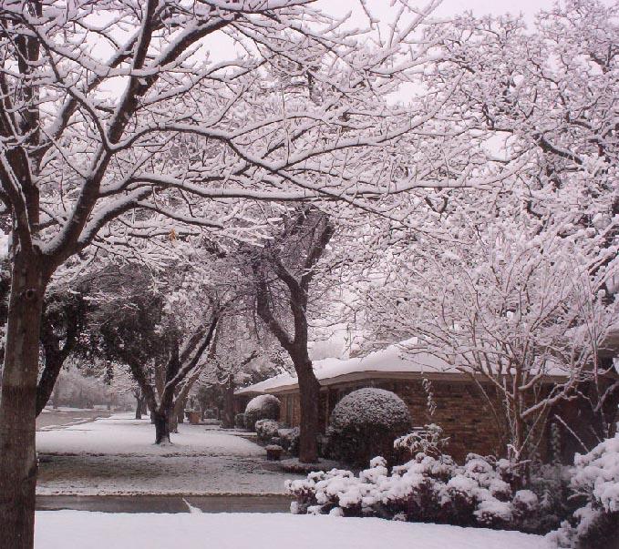 Irving texas   tree in snow 2