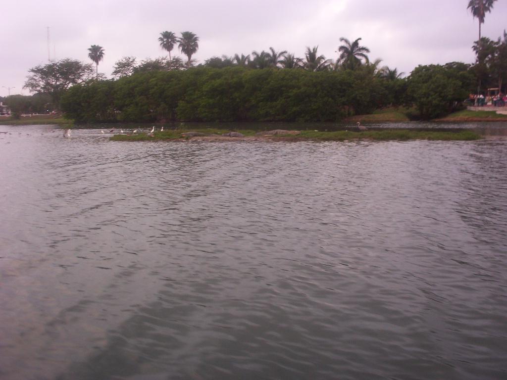 Tampico Tamaulipas Mexico   Crocodiles Resting