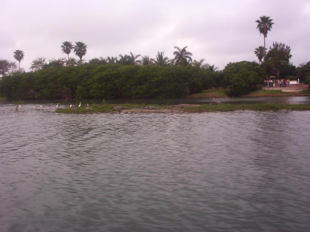 Tampico Tamaulipas Mexico   Crocodiles in lake