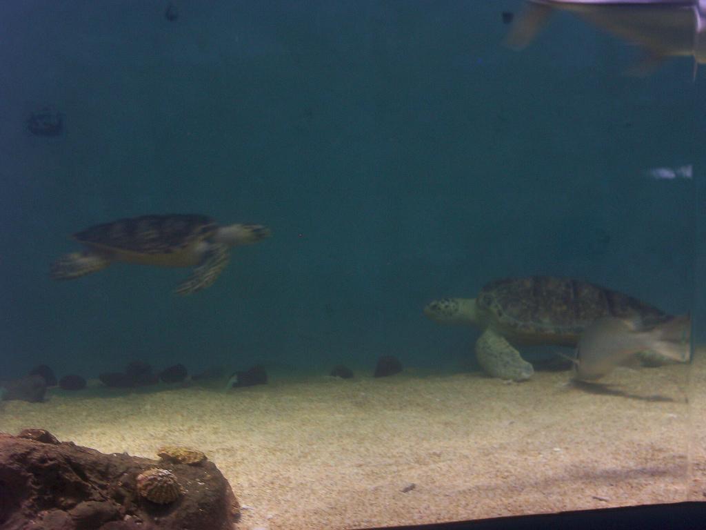 Veracruz Mexico   Sea Turtle Meeting