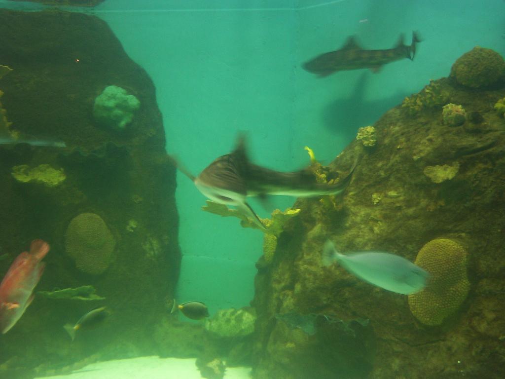 Veracruz Mexico   Shark In Aquarium