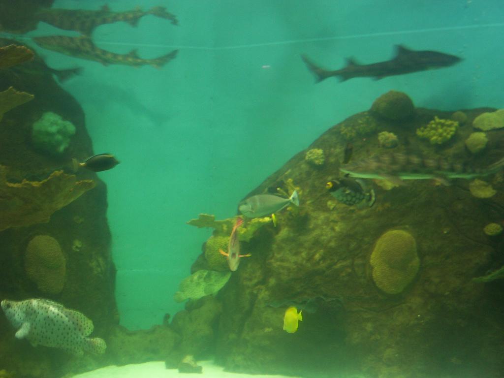 Veracruz Mexico Aquarium