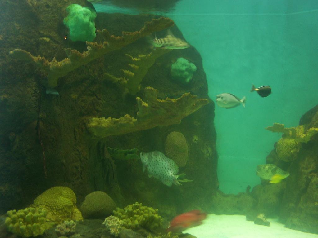 Veracruz Mexico Aquarium 2