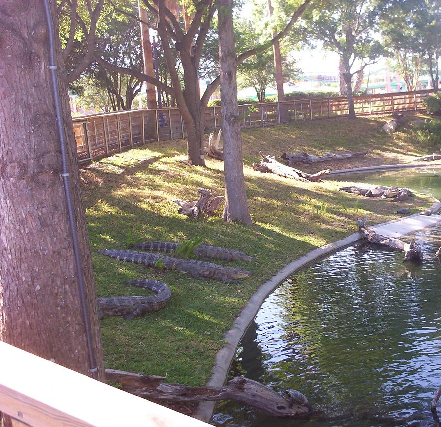 alligators and turtles at seaworld san antonio texas