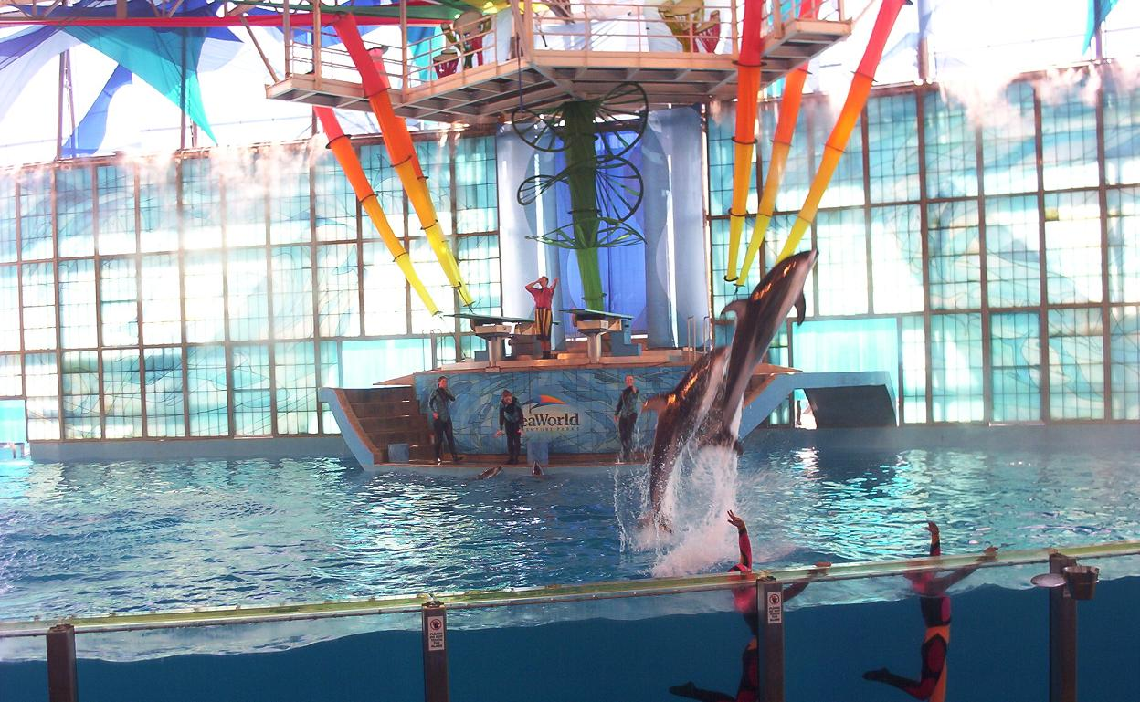 dolphins jumping at seaworld san antonio texas