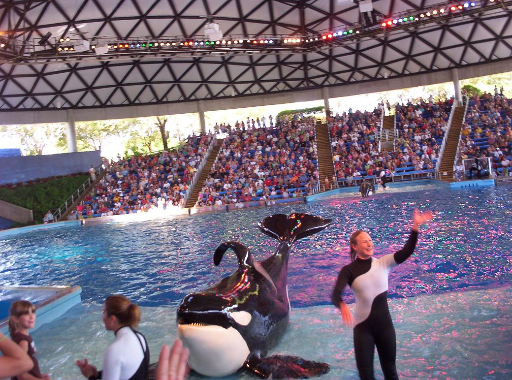 shamu killer whale at seaworld san antonio texas