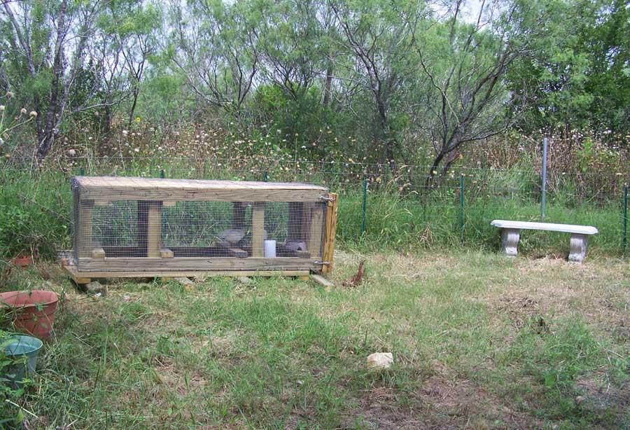chicken home in the garden