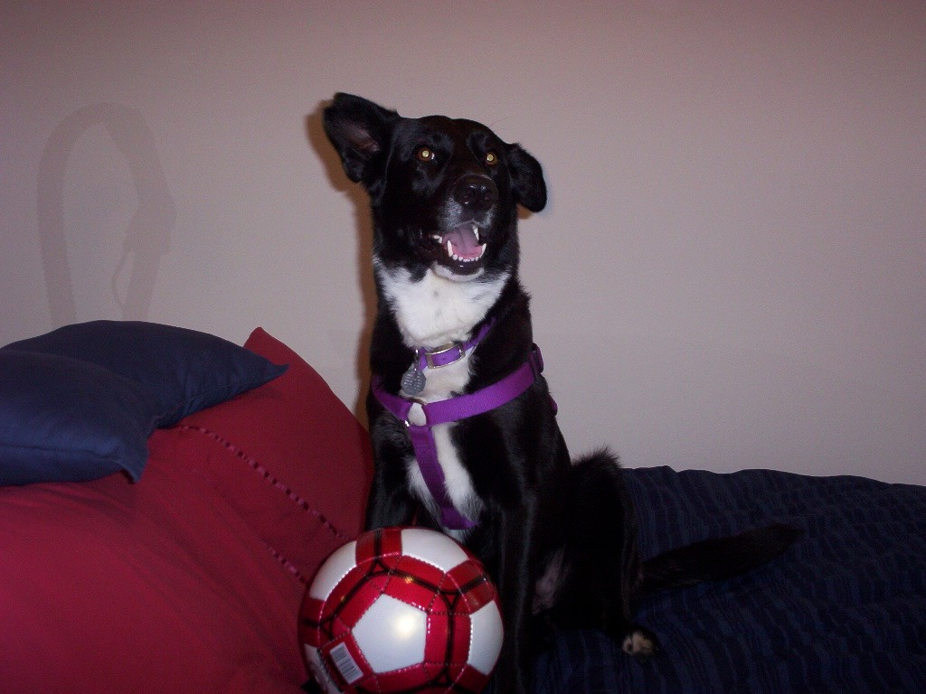 Lovey sitting on bed with soccer ball