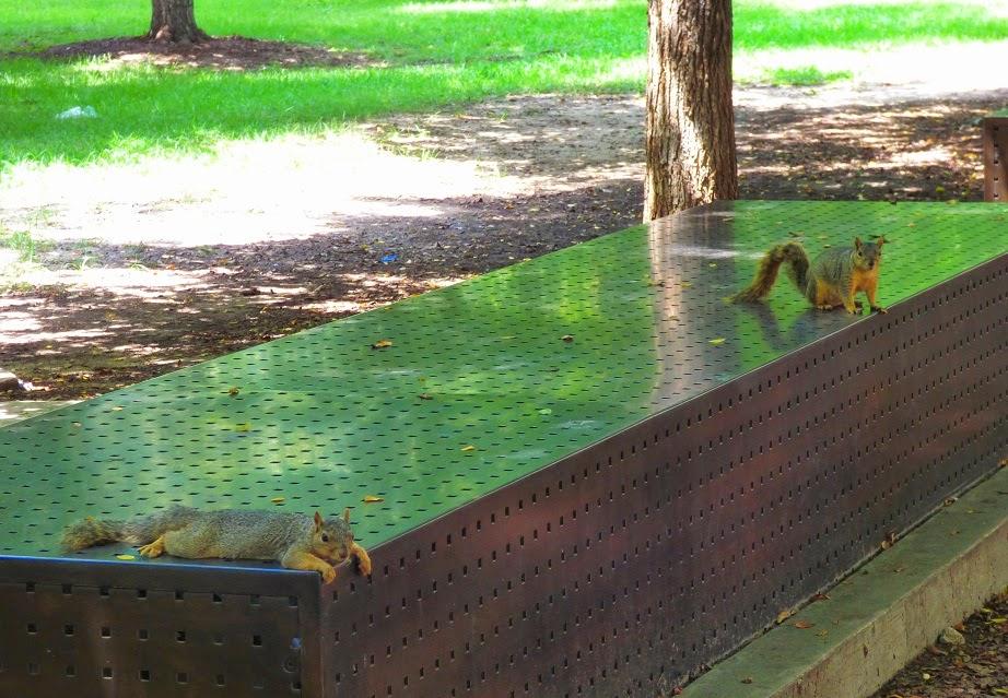 squirrel lounging