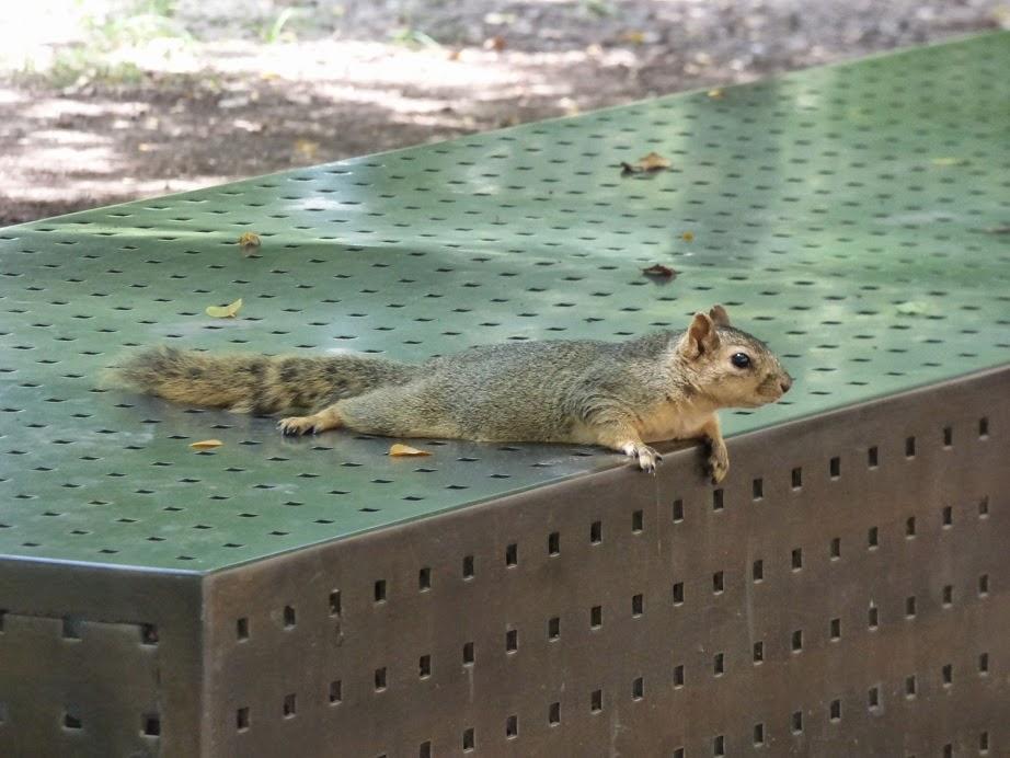 squirrel lounging 2
