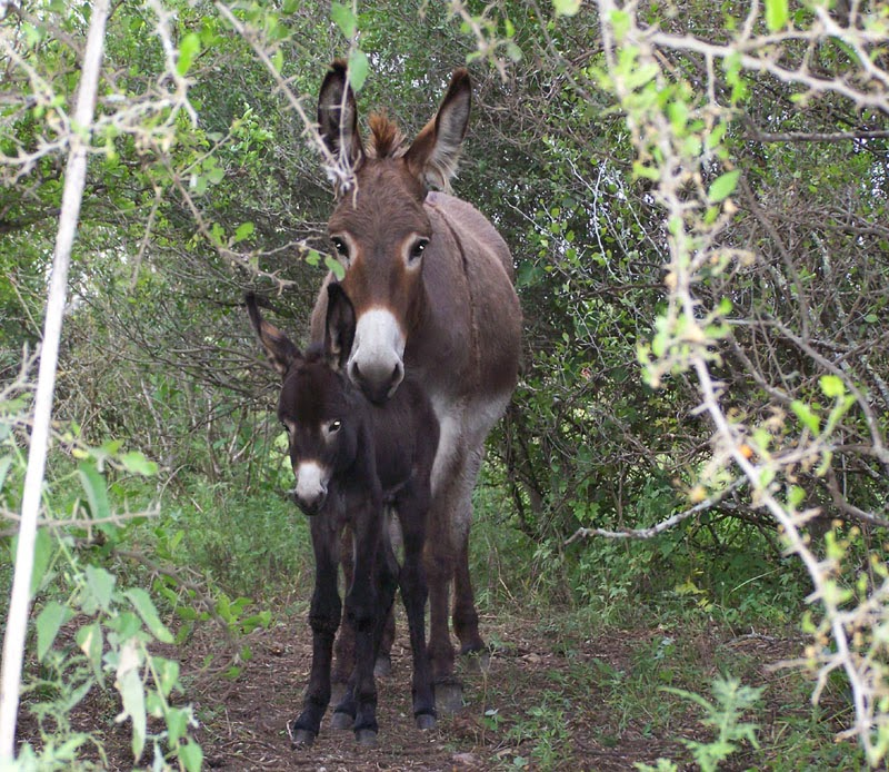donkey mom and baby