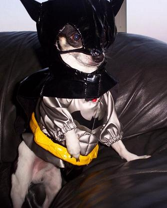 batdog begins blog