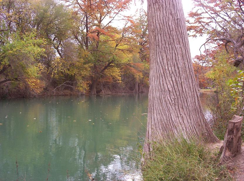 tree by medina river in castroville texas