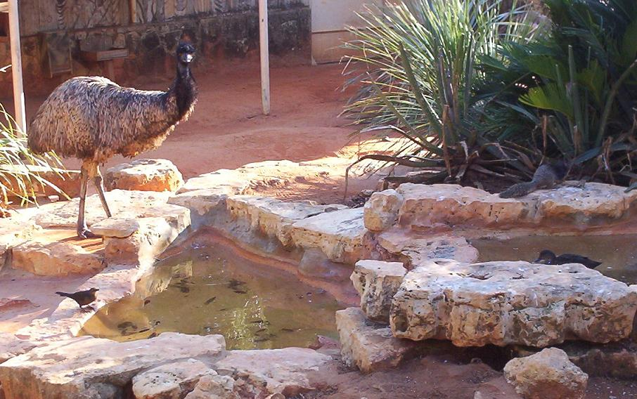 ostrich bird duck squirrel and pond in san antonio texas zoo